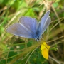 Butterfly on wild flower at Bedfont Lakes Country Park