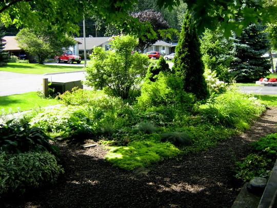 Irish Moss...Sagina subulata (Segina subulata...Irish Moss)