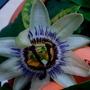 Flower_fruit