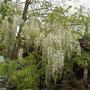 Garden_011