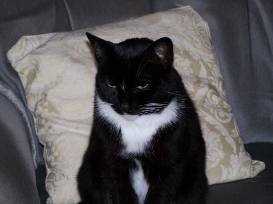 Pretty Kitty........ Poppett