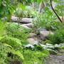Irish Moss -Sagina (Sagina procumbens aurea)