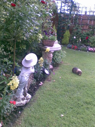 my guinea pig enjoying my summer garden