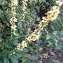 Unidentified Wild Flower