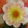 New_garden_011
