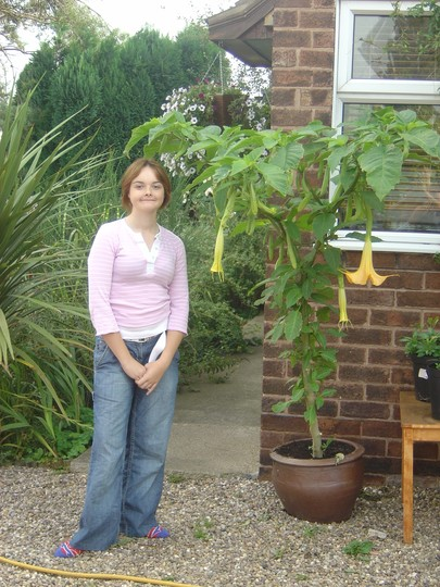 My eldest daughter and the Brugmansia (Brugmansia yellow)