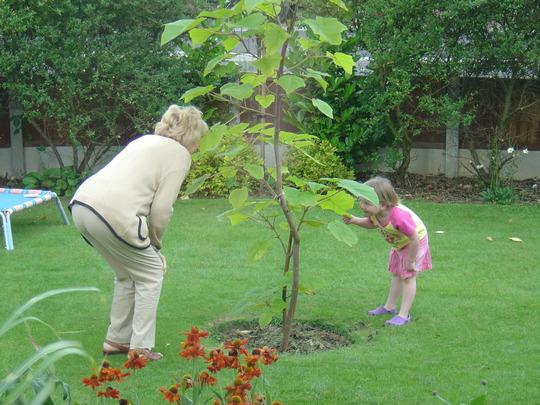 Youngest daughter and Paulownia (Paulownia tomentosa (Foxglove tree))