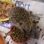 George the Hedgehog.........