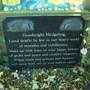 Hedgehog Graveyard and shrine