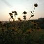Dsc_0905_susans_at_sunrise