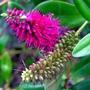 Bosham garden flowers