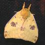 Moth_io_wings_closed_no_eye_7_05_08_sm