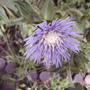 2008_07_20_054