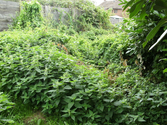 Lots Of Nettles & Bindweed:)