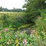 More Midhurst wild flowers