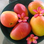 Mangoes (Mangifera indica (An Lo Kuo))