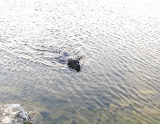 lassie in the loch