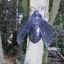Tree bug