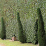 Chatsworth_hedges.jpg