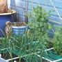 Square Foor Gardening