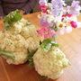 Giant Cauliflower summer 2008 1