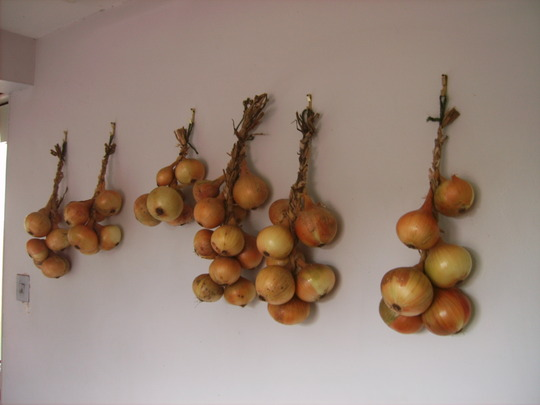 Onions on the wall in the kitchen