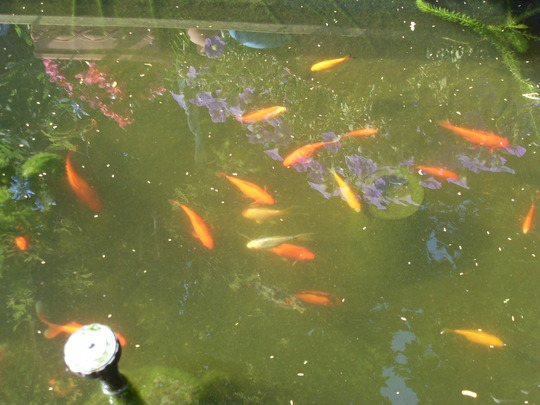 some of the fish today enjoying the sunshine