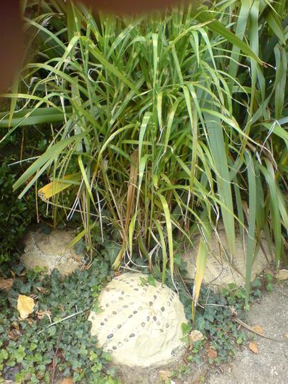 my zebra grass
