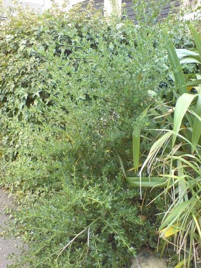 the plant next to the zebra grass