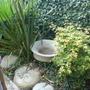 My_garden_aug_2008_063