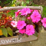 Late_summer_2008_082