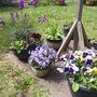 start of a garden!