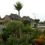 Tall_yucca_in_front