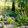 September view of Conifer bed