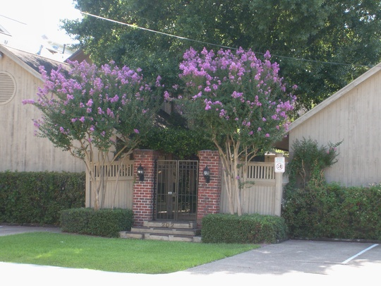 light purple crape myrtle