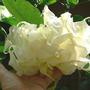Brug_shredded_white_8_25_08_inside_sm