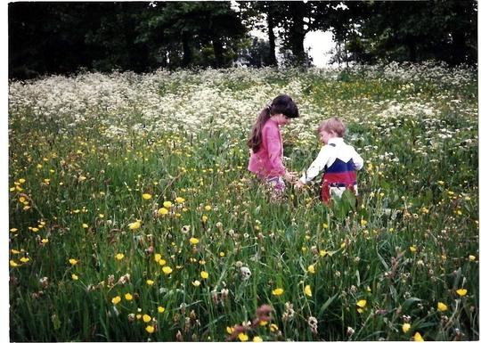 Wildflower Meadow (Abelia corymbosaoyy)
