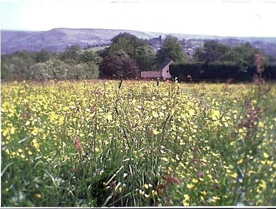 ANCIENT WILDFLOWER MEADOW