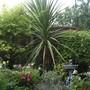 Top_garden_4