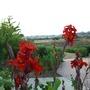 Le jardin de la femme - Cyprus
