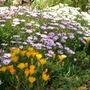 Spanish garden....a few more pics