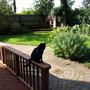 Garden and Cat