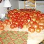My kitchen table with the day's pick of tomatoes in August this year (tomatoes)