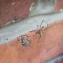 Spider punch up