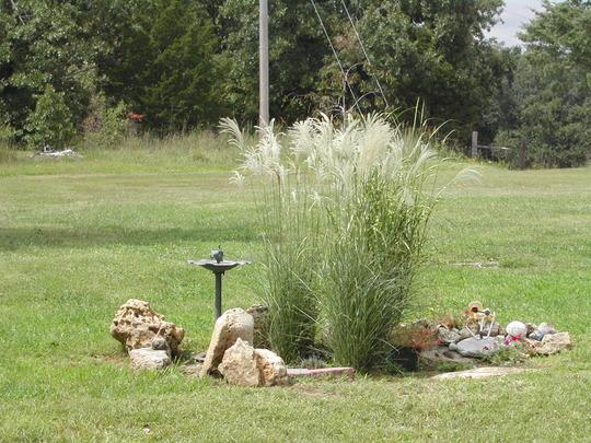 Zebra and Graziella ornamental grasses