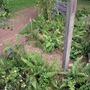 Show garden way through wood