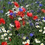 Show garden wild flowers