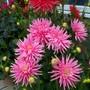 marks & spencer cactus PINK