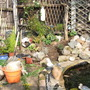 Garden_barry_with_his_work_shed_021