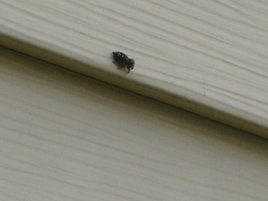 little guy on the side of the house